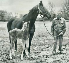 Somethingroyal and her foal, baby Secretariat, future Triple Crown winner. All The Pretty Horses, Beautiful Horses, Animals Beautiful, Thoroughbred Horse, Clydesdale Horses, Breyer Horses, Sport Of Kings, Majestic Horse, Horses And Dogs