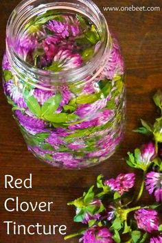 Red Clover Tincture