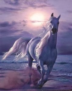 This is a very pretty spirited horse.  This is gorgeous!!