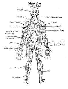 anatomia humana para colorir - Pesquisa Google