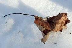 Hiver / Feuille