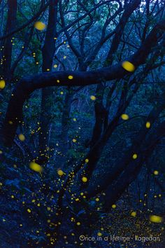by Once in a lifetime-Firefly Loin, Once In A Lifetime, Fireflies, Lights, Fruit, Inspirational, Lantern, Glow Worms, The Fruit