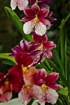 Kula's Botanical garden in Maui, Hawaii  by flequi, via Flickr