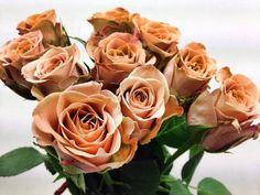 Rosa Cappuccino now at www.vandijkbloemen.nl | Rozen Roses Rose ...
