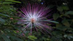 Uma flor perdida no outono em Petrópolis
