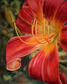 """Studio Sale! Day Lily Original Watercolor Painting 8 x 10"""" by Krista Hasson $ 165.00"""