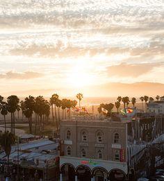 Meet Ace | Matt Bauer, Creative Director in Venice, CA | Kit and Ace