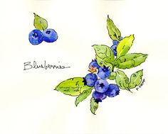 Blueberries Botanical Print Watercolor with Pen and Ink, Berries Vine, Marine blue, violet, indigo, lime green, spring green. $20.00, via Etsy.