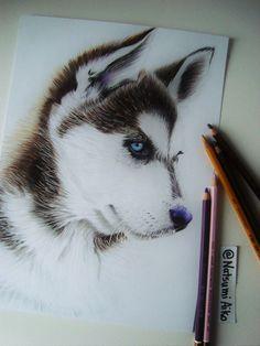 Husky by Natsumi-Aiko on DeviantArt