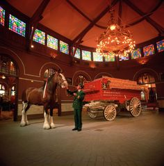 The historic Grant's farm and Clydesdale stable. been there and it's as beautiful as in this picture. The horses are nothing short of impressive. Pretty Horses, Horse Love, Beautiful Horses, Animals Beautiful, Pretty Animals, Clydesdale Horses Budweiser, Budweiser Commercial, Grants Farm, Horses