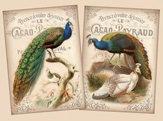 Vintage exotic birds 2.5 x 3.5 inch images digital collage sheet Greeting Cards Craft Tag Label Ephemera Whimsical, via KarisaGraphic @ etsy. Four for $3.40USD
