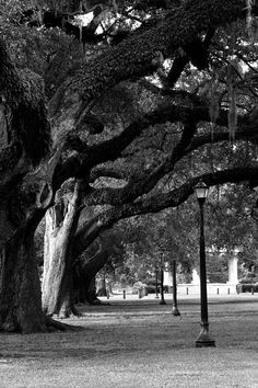 Live Oaks of Audubon Park