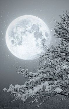 Black and white Moon winter scape Moon Moon, Blue Moon, Beautiful Moon, Beautiful World, Beautiful Scenery, Beautiful Images, Winter Moon, Deep Winter, Winter Night