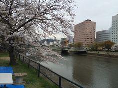 2015年4月 京橋川