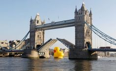 Duck on the Thames