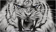 Curious Cat, Siberian Tiger wallpapers Wallpapers) – Wallpapers For Desktop White Tiger Tattoo, Tiger Head Tattoo, Tiger Tattoo Design, Tiger Design, Head Tattoos, Tattoo Designs, Angry Tiger, Pet Tiger, White Bengal Tiger