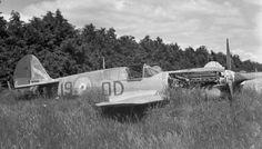 RNZAF, Rukuhia, stored P-40