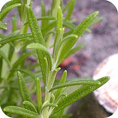 Enjoying The Sun, Farm Gardens, Herb Garden, Food Art, Herbalism, Remedies, Spices, Herbs, Vegetables