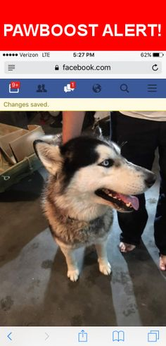 Is this your lost pet? Found in Twin Falls, ID 83301. Please spread the word so we can find the owner!  Jumped over our fence, friendly, no tags  Nearest Address: Near Cedar Park Cir & Cedarchip Rd