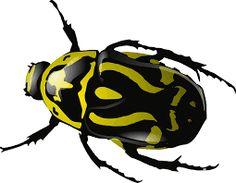 Bildergebnis für bugs