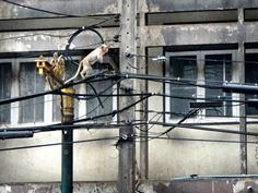 #malditosmonos Ciudad de los monos en  #Lopburi #Tailandia Track Lighting, Ceiling Lights, Home Decor, Thailand Travel, Rompers, Cities, Decoration Home, Room Decor, Outdoor Ceiling Lights