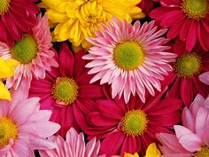 Bungalow Flooring Multi Color 18 in. x 27 in. Neoprene Big Bloom Door Mat 20389011827 at The Home Depot - Mobile Arte Floral, Pink Daisy, Pink Yellow, Yellow Daisies, Pink Gerbera, Pink Sunflowers, Gerbera Flower, Yellow Sunflower, Bloom