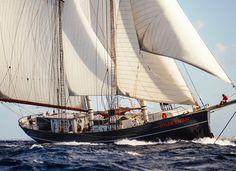 Tall Ship | Wylde Swan
