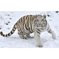 White Tiger ❤ liked on Polyvore featuring home, home decor, white home decor and white home accessories