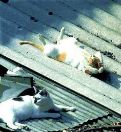 Sun bathing on the roof!