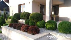 DUŻY OGRÓD małej ogrodniczki 1 - strona 707 - Forum ogrodnicze - Ogrodowisko