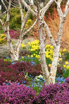 Spring colour at the Bressingham Gardens