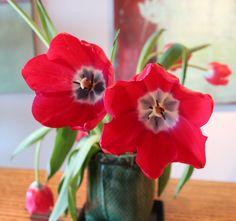 East Meets West - Tulips (emwcenter.com)