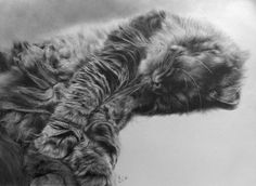 paul lung graphite drawings