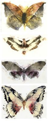KO.34 butterflies moths 2 - giclee print from original watercolour #watercolour #butterflies #swallowtail