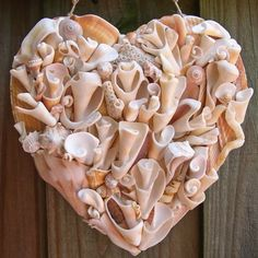 Even broken shells are beautiful.  Shellbelle's Tiki Hut: Driftshell Hearts