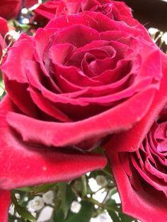 Red rose #lovely