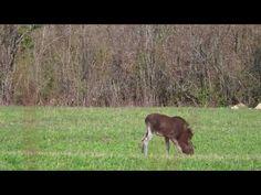 Ingo Valgma Moose, Cow, Animals, Youtube, Animales, Animaux, Mousse, Cattle, Animal
