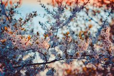 Close-up Photography of Cherry Blossom · Free Stock Photo Life Is Like, What Is Life About, Close Up Photography, Free Stock Photos, Cherry Blossom, Fonts, Neon Signs, Landscape, My Favorite Things