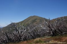 The Australian Alps: Mt Feathertop via The Razorback Australia Day, Victoria Australia, Holidays In January, Long Holiday, Alps, Explore, Mountains, Travel, Australia Day Date