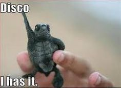 Tiny Adorable Animals That Will Make You Squee - Funny Animal Quotes - - LOL Interesting Animals pics AM Friday 17 April 2015 PDT) 20 pics The post Tiny Adorable Animals That Will Make You Squee appeared first on Gag Dad. Animal Captions, Funny Animal Photos, Funny Captions, Funny Animal Memes, Animal Quotes, Cute Funny Animals, Cute Baby Animals, Funny Cute, Funny Photos