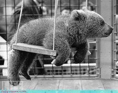 cutel lil' bear.