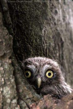 monty python owl