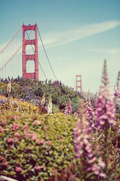 "Take me back to San Fran!  ""The coldest winter I ever had was the summer I spent in San Francisco"""