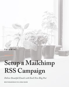 How to Setup a Mailchimp RSS Campaign, so that your blog posts are sent via email daily, weekly, or both, mailchimp tutorial, blog tips, blog guide, wordpress tutorial