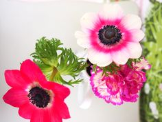 About Me Blog, Plants, Design, Plant, Planets