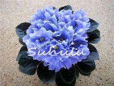 50Pcs Mini Bonsai Violet Seeds,African Violet Seeds, Garden Potted Plants Violet Flowers Perennial Herb Matthiola Incana Seed