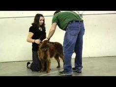4-H dog showmanship videos from Oregon 4-H