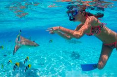 Swimming with the sharks in Bora Bora is a must-do adventure