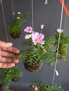 a string garden...too cool. perfect for a small outdoor/porch garden (also keeps the bunnies out. lol)