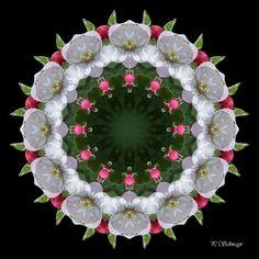 Mandala ''Apfelblüte 01'' von KreativesbyPetra   #mandala #apfelblüte #appleblossom #frühling #spring #kreatives #sommer #summer #garten #garden #makro #makrofotografie #Natur #nature #naturfotografie #naturephotography #macro #macrophotography #Spiegelung #Reflexion #photoshop #canon #canonEOS Mandala Art, Tree Skirts, Petra, Christmas Tree, Holiday Decor, Canon, Beautiful, Photoshop, Home Decor